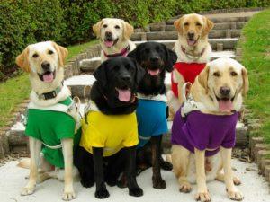 盲導犬たちの写真